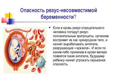 Опасность резус-несовместимой беременности? Если в кровь резус-отрицательного...