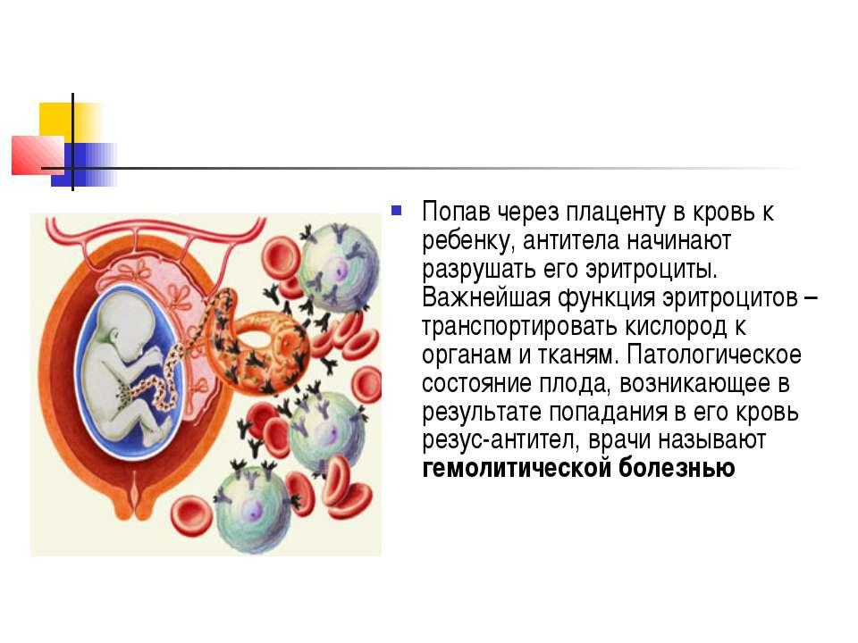 Попав через плаценту в кровь к ребенку, антитела начинают разрушать его эритр...