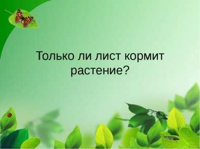 Только ли лист кормит растение?