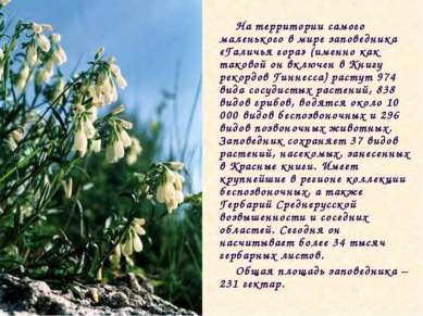 На территории самого маленького в мире заповедника «Галичья гора» (именно как...