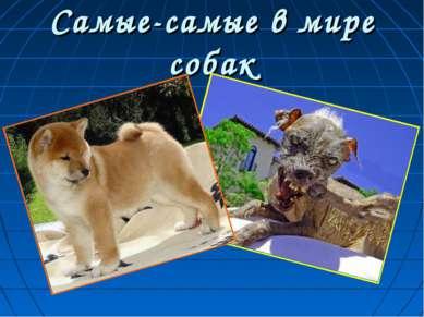 Самые-самые в мире собак