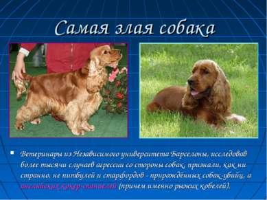 Самая злая собака Ветеринары из Независимого университета Барселоны, исследов...