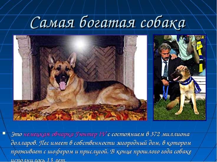 Самая богатая собака Это немецкая овчарка Гюнтер IV с состоянием в 372 миллио...