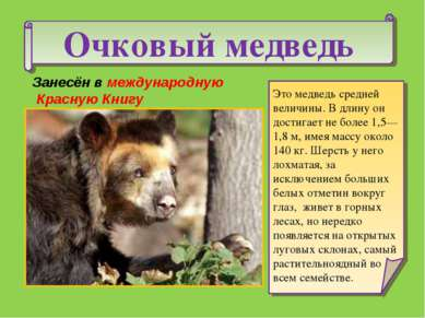 Очковый медведь Это медведь средней величины. В длину он достигает не более 1...