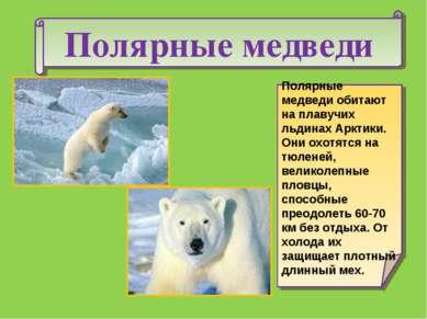Полярные медведи Полярные медведи обитают на плавучих льдинах Арктики. Они ох...