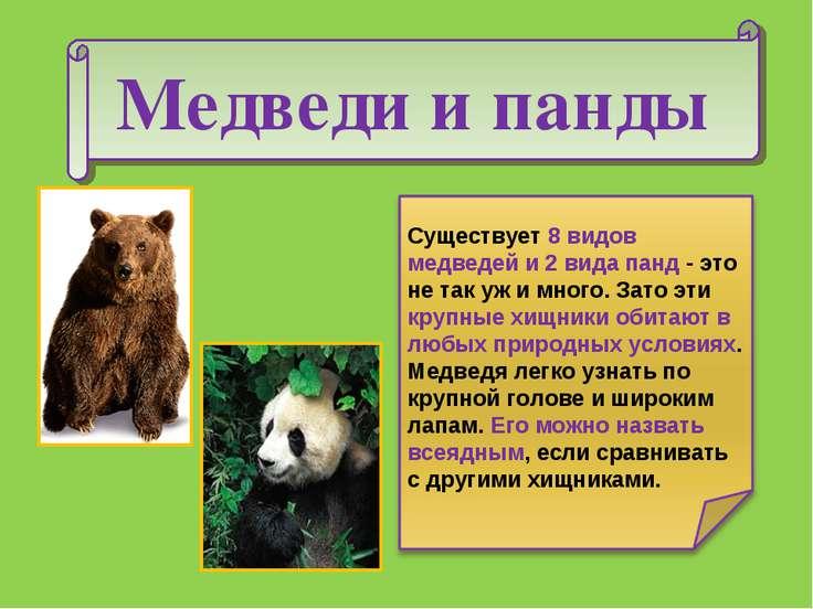 Медведи и панды