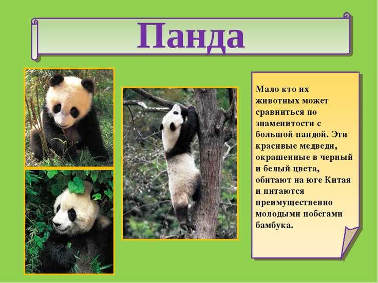 Панда Мало кто их животных может сравниться по знаменитости с большой пандой....