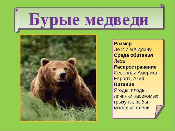 Бурые медведи Размер. До 2,7 м в длину Среда обитания. Леса Распространение. ...