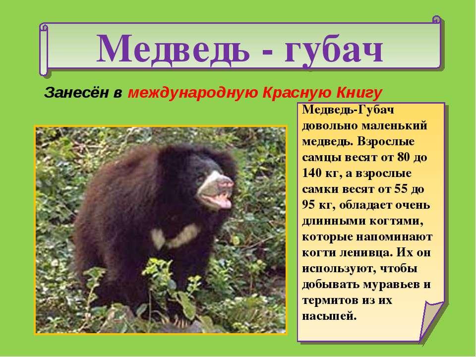 животные красной книги московской области для детей фото