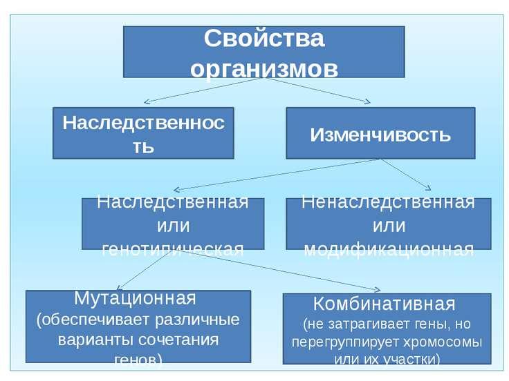 Свойства организмов Наследственность Изменчивость Наследственная или генотипи...