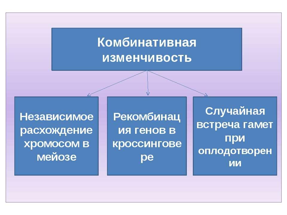 Комбинативная изменчивость Независимое расхождение хромосом в мейозе Случайна...