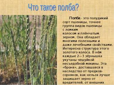Полба- это полудикий сорт пшеницы, точнее группа видов пшеницы сломким коло...