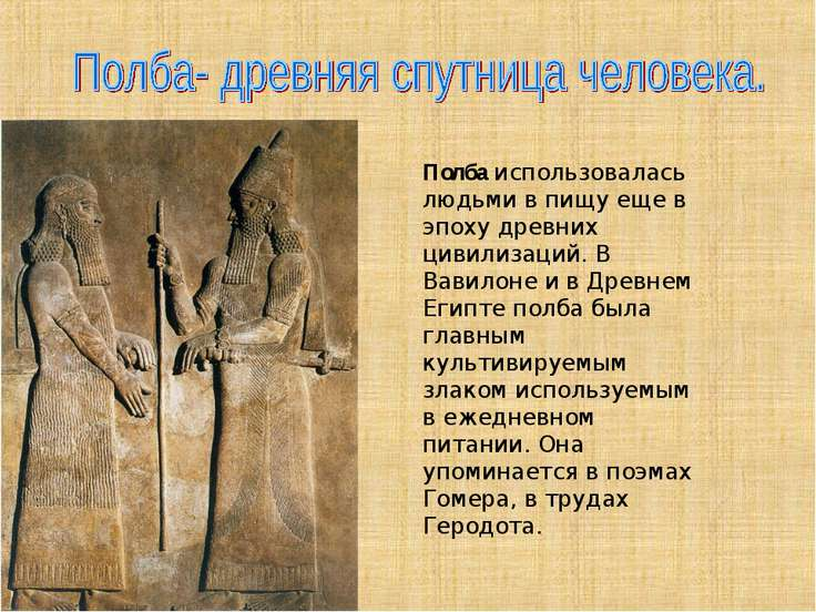 Полбаиспользовалась людьми в пищу еще в эпоху древних цивилизаций. В Вавилон...