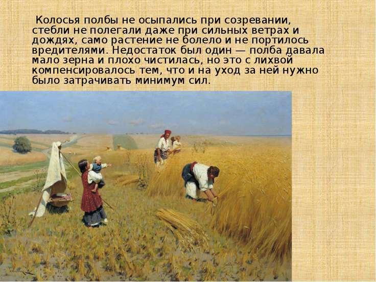 Колосья полбы не осыпались при созревании, стебли не полегали даже при сильны...