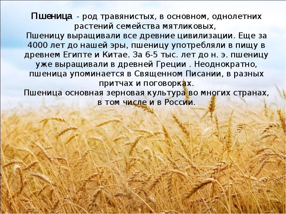 Пшеница - род травянистых, в основном, однолетних растений семейства мятлико...