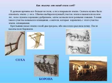 Как тысячу лет назад сеяли хлеб? В далекие времена все больше не поля, а леса...