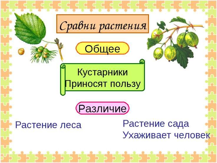 Сравни растения Общее Кустарники Приносят пользу Различие Растение леса Расте...