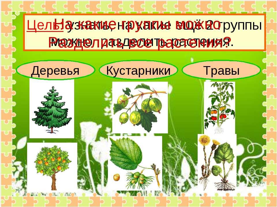 Деревья Кустарники Травы Цель: узнать, на какие ещё 2 группы можно разделить ...