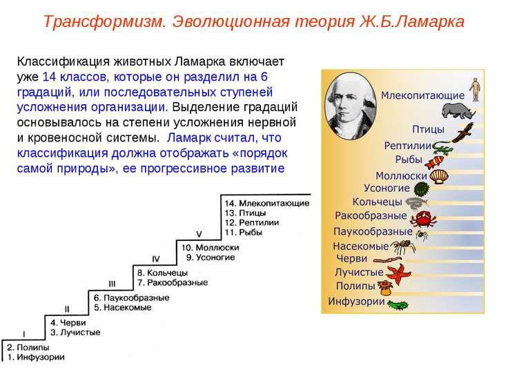 Классификация животных Ламарка включает уже 14 классов, которые он разделил н...