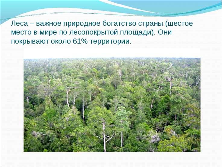 Леса – важное природное богатство страны (шестое место в мире по лесопокрытой...