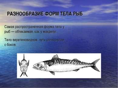 РАЗНООБРАЗИЕ ФОРМ ТЕЛА РЫБ Самая распространенная форма тела у рыб — обтекаем...