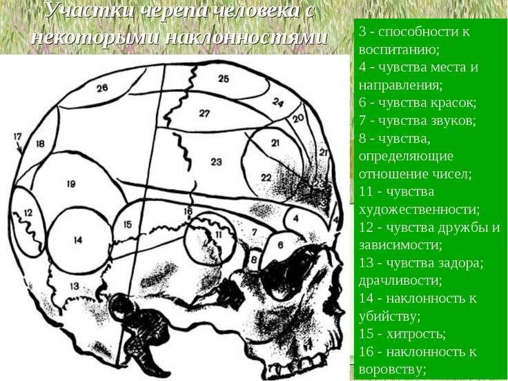 Участки черепа человека с некоторыми наклонностями 3 - способности к воспитан...