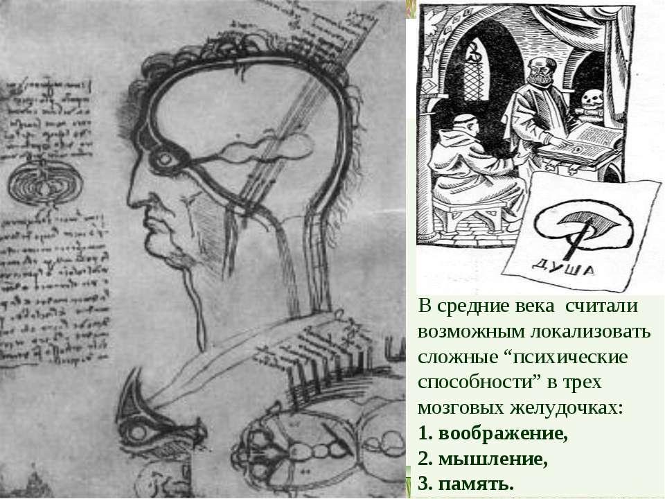 """В средние века считали возможным локализовать сложные """"психические способност..."""
