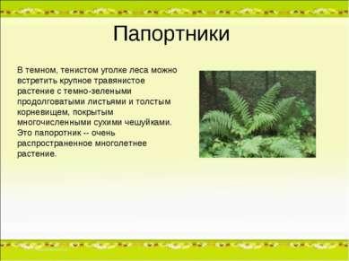 Папортники В темном, тенистом уголке леса можно встретить крупное травянистое...