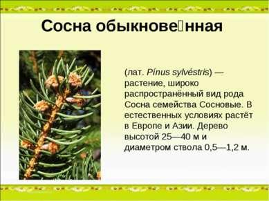 Сосна обыкнове нная (лат.Pínus sylvéstris) — растение, широко распространённ...