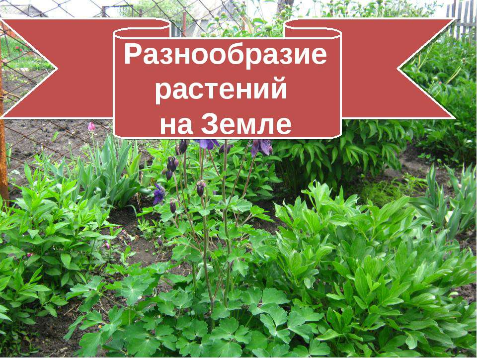 Разнообразие растений на Земле