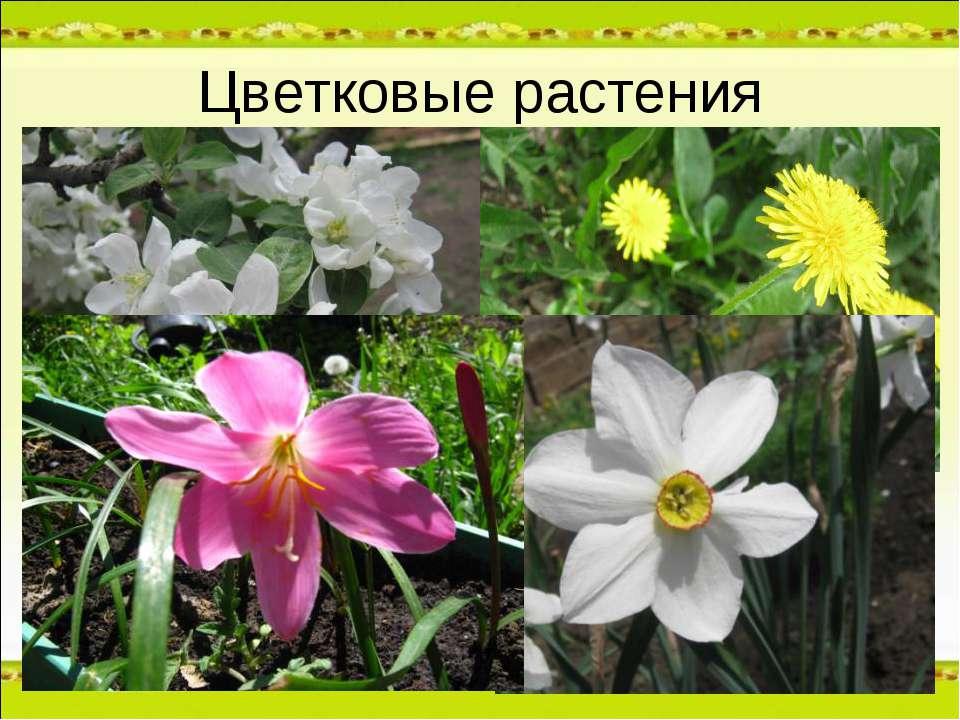 Цветковые растения