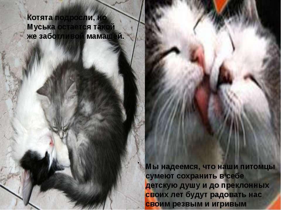 . Котята подросли, но Муська остается такой же заботливой мамашей. Мы надеемс...
