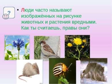 Люди часто называют изображённых на рисунке животных и растения вредными. Как...