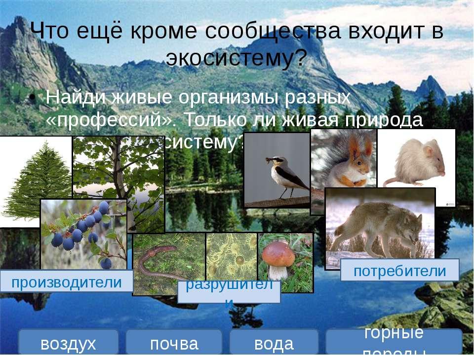 Что ещё кроме сообщества входит в экосистему? Найди живые организмы разных «п...