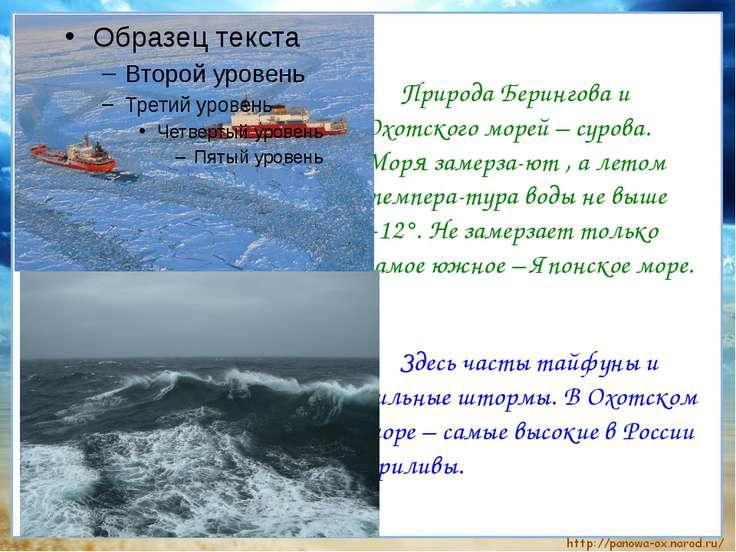 Природа Берингова и Охотского морей – сурова. Моря замерза-ют , а летом темпе...