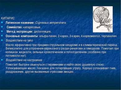 КИПАРИС Латинское название: Cupressus sempervirens. Семейство: кипарисовые. М...