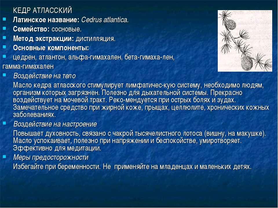 КЕДР АТЛАССКИЙ Латинское название: Cedrus atlantica. Семейство: сосновые. Мет...