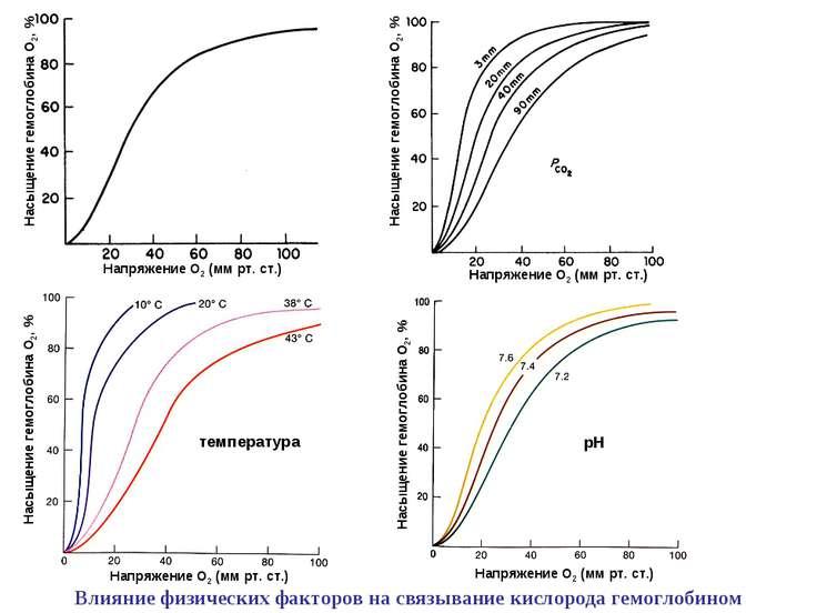 Насыщение гемоглобина О2, % Насыщение гемоглобина О2, % Насыщение гемоглобина...