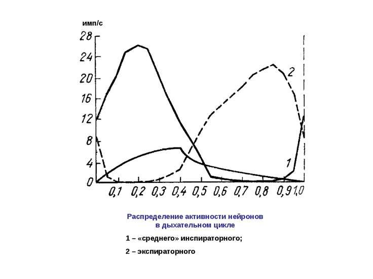 Распределение активности нейронов в дыхательном цикле 1 – «среднего» инспират...