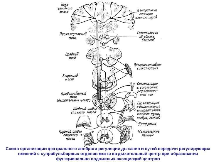 Схема организации центрального