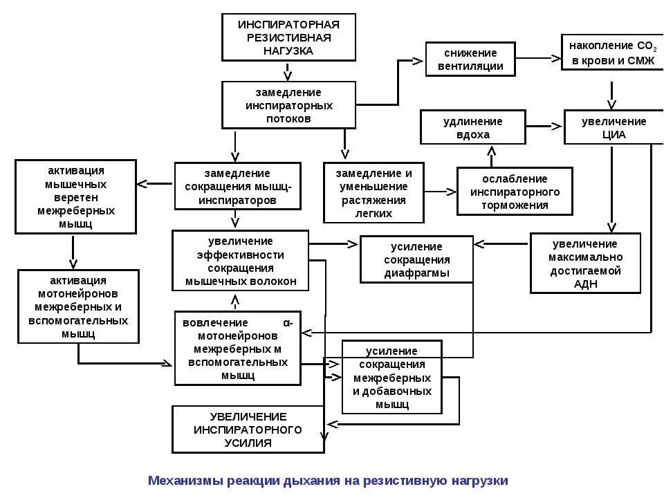 ИНСПИРАТОРНАЯ РЕЗИСТИВНАЯ НАГУЗКА активация мышечных веретен межреберных мышц...
