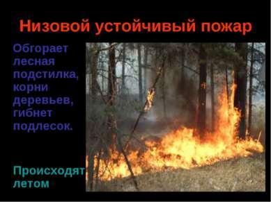 Низовой устойчивый пожар Обгорает лесная подстилка, корни деревьев, гибнет по...