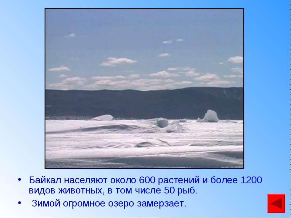Байкал населяют около 600 растений и более 1200 видов животных, в том числе 5...