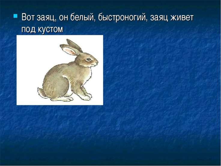 Вот заяц, он белый, быстроногий, заяц живет под кустом