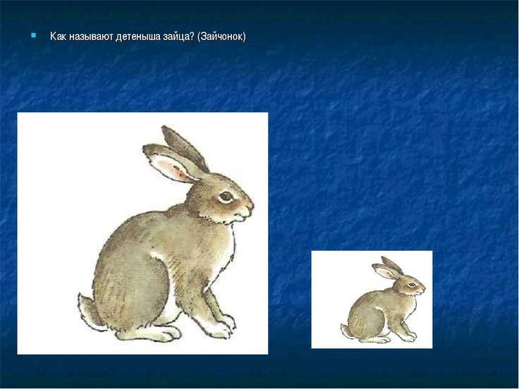 Как называют детеныша зайца? (Зайчонок)