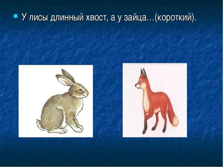 У лисы длинный хвост, а у зайца…(короткий).