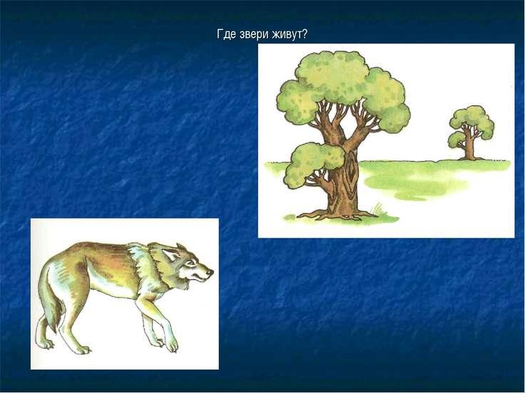 Где звери живут?