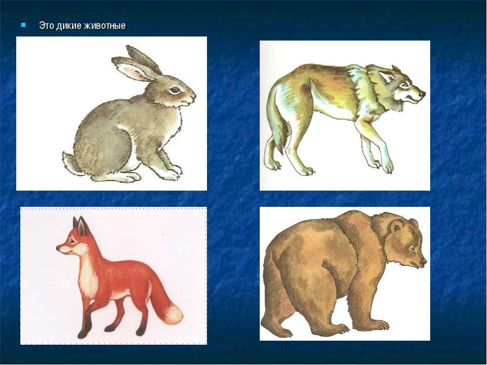 Это дикие животные