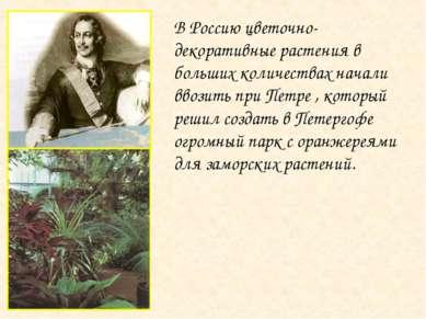 В Россию цветочно-декоративные растения в больших количествах начали ввозить ...