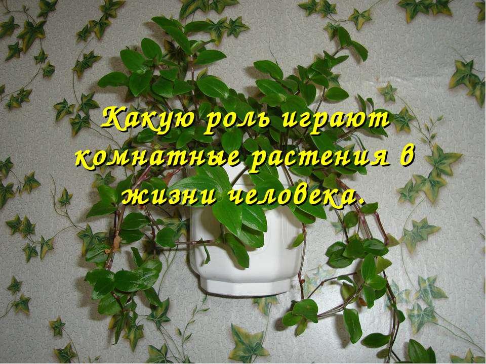 Какую роль играют комнатные растения в жизни человека.